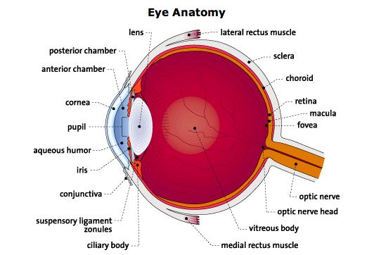 Human anatomy ken to fude no ryu kenshu kai karate soke solly said eye ear ccuart Image collections